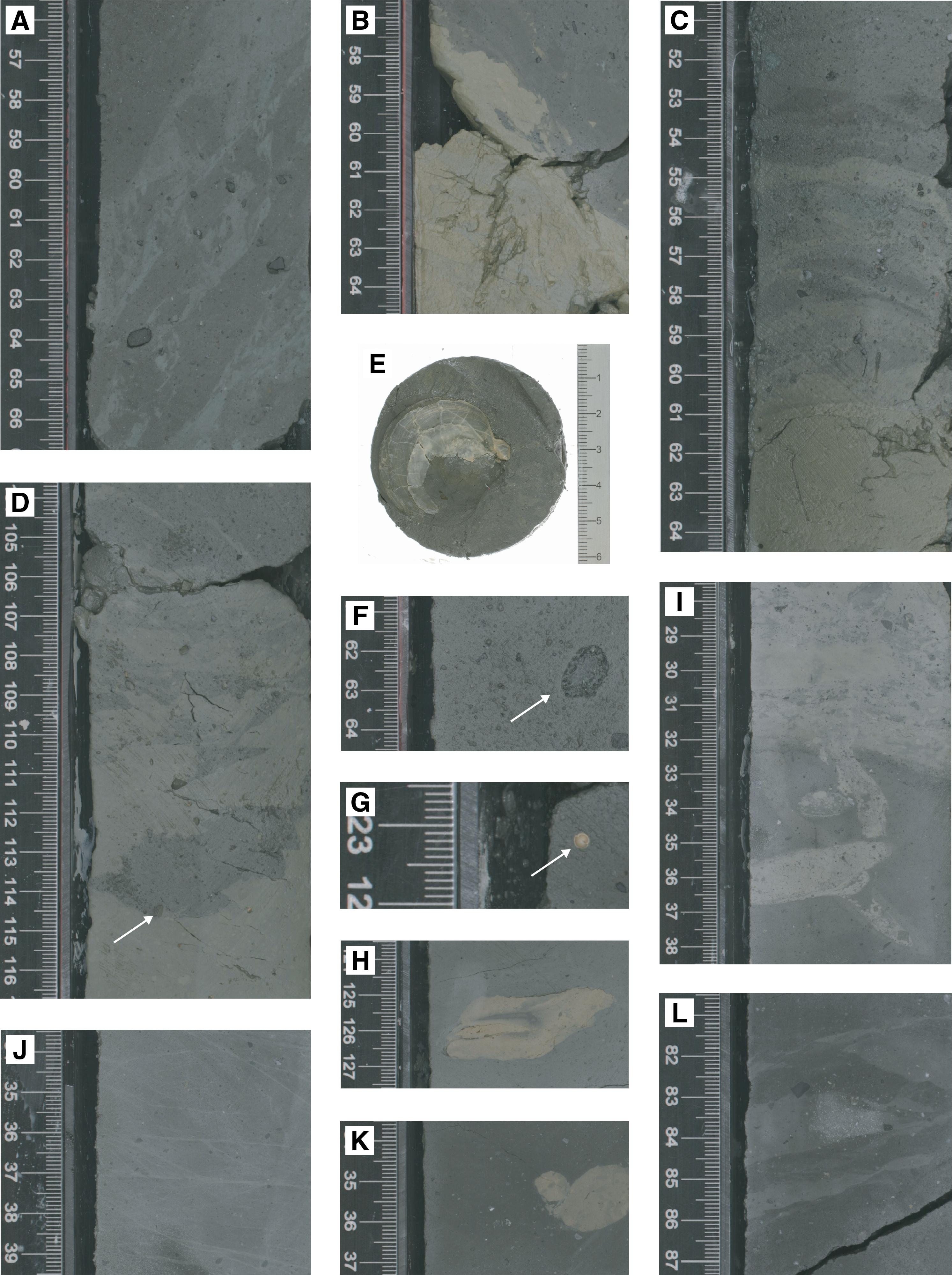 IODP Publications • Volume 374 expedition reports • Site U1521